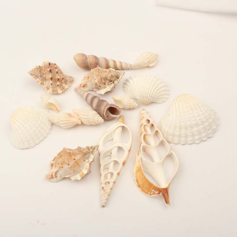 조개 껍질 Assorted shells